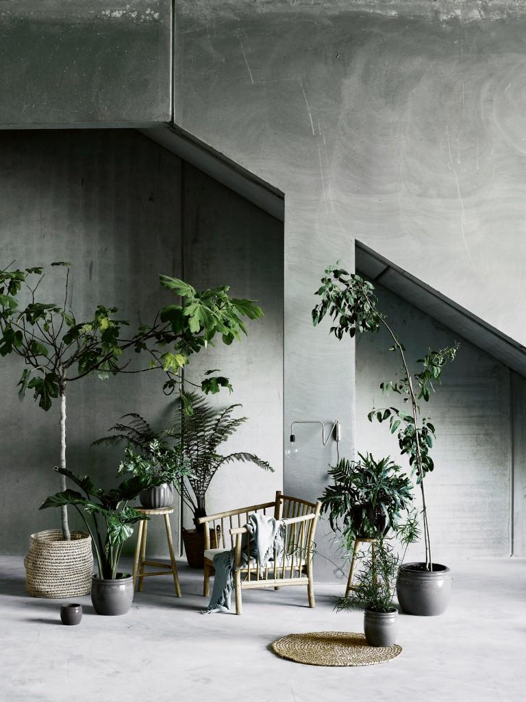 maisonbelle-tinek-kamerplanten